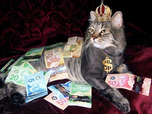 bohatá kočka