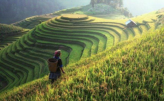 obdělávané pole