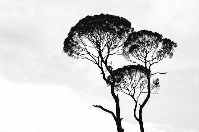 Čierne obrysy stromov na bielej stene.jpg